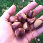 Keep Lyrical Tradition Alive: Roast Chestnuts This Holiday